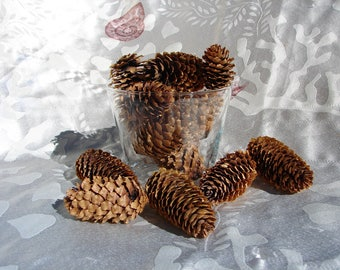 "Pine cones collection of 12, from Big Bear Lake, CA. 1 1/2""-3 1/2"" pinecones wedding decor cabin decor craft supplies Holiday decor mountain"
