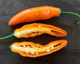 "Aji Amarillo NON-GMO / open pollinated ""SEEDS"". 2018 collection."