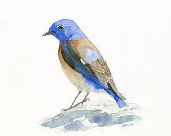 ORIGINAL Male Western Bluebird - Watercolor