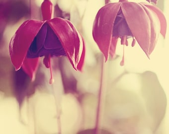 Fuchsia photograph, green purple pink, pink and purple flowers green leaves, photography vintage style