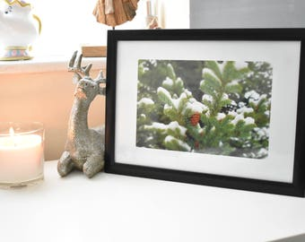 Pine cone, pine tree, winter photograph, framed print, nature photography, A4 frame available in 3 colours