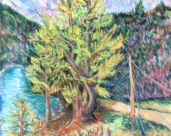 Sentinel Pine print