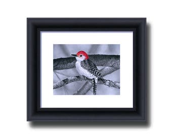 Bird Wall Décor - Black and White - Giclee Print - Bird Drawing - Red-bellied Woodpecker