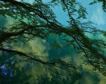 Blue Dreams  Water   Lake   Fine Art Photography   polychromatophil   Abstract   Art   Photo   Light Blue Green Turquoise   Tree   Branches