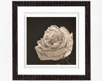 Monochrome Nature Photography Print Wall Art Prints Home Decor Wall Decor Flower Photography Photos for Cards Rose Print Floral Wall Art