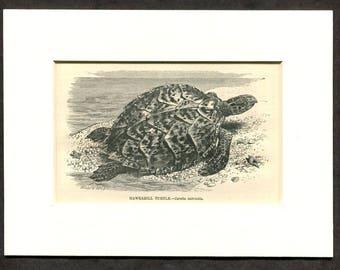1865 Antique Print of Sea Turtle Hawksbill Turtle