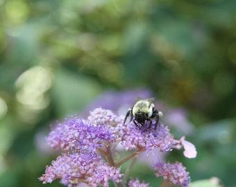 Bee and Purple Flower Art Print, Nature Photography Hydrangea Green Bug Insect Macro Woodland Wall Art Wall Decor