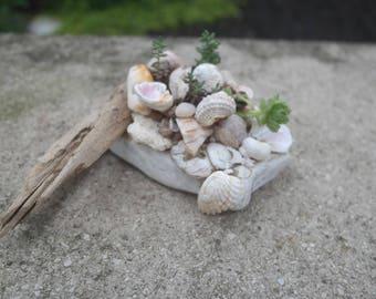 Driftwood, stone & shell succulent planter