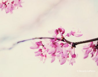 Spring, blossoms, pink, floral, fine art photography