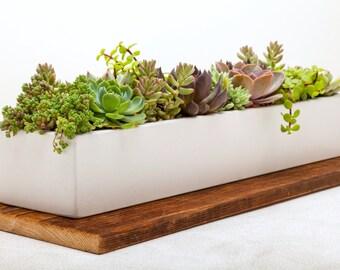 Concrete Planter, Succulent Planter, Planter, Concrete, Outdoor Planter, Indoor Planter, White, Herb Planter, Cement Planter