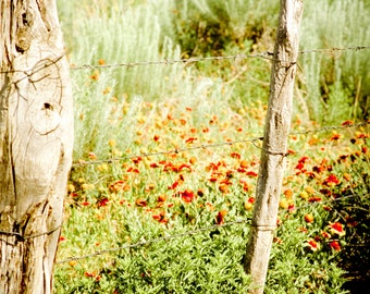 Rustic Photography, wildflowers, weeds, fence posts, red, green, brown, Rustic Home Decor, Fine Art Prints