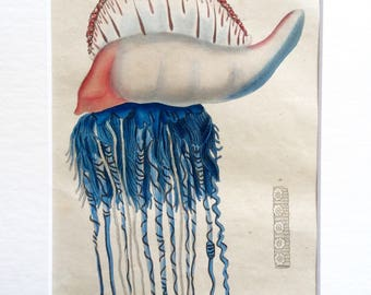 Antique French 1833 JELLYFISH Hand-Coloured Engraving Portugese Man of War SEALIFE Guerin 180yrs old