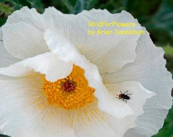 White, Orange Flowers Art Photography Wildflowers