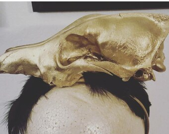 Skull, Taxidermy, Skull headband, Coyote, Coyote skull, Skulls, Ready to ship, msformaldehyde, Halloween, Horror, Horror headband