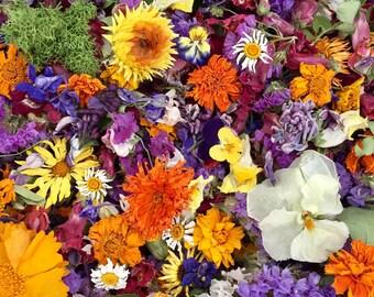 Bulk Dried Flowers, Wedding Confetti, Real, Wildflowers, Flower Girl, Wedding Decor, Aisle Decor, Table Decor, Biodegradable, 200 Cups