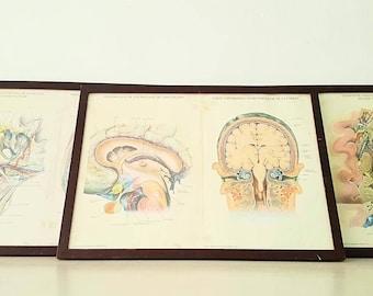 Gehirn-Anatomie-Bilder viel Jahre 60 / 60 s Gehirn Anatomie Bilder viel