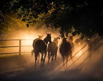 Herd of Horses - SKU 0219
