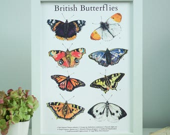 Illustrated Guide to British Butterflies A4 Limited Edition Fine Art Print *SALE*