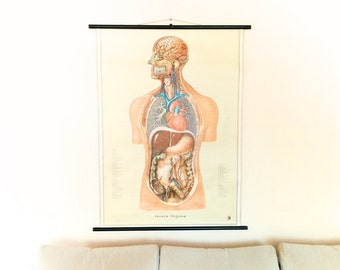 Vintage Anatomical Wall Chart, Human body, Internal Organs Anatomy Chart, German Educational Scroll Poster, Scientific classroom map