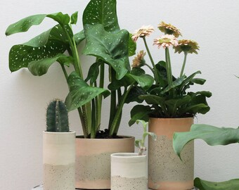Pink plant pot indoor. Speckled ceramic planter pot. Speckled planter. Modern ceramics. Planters for succulents. Planter vase. Cactus. Green