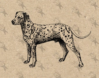Vintage Image Dalmatian Dog Breed Instant Download Digital printable clipart graphic Transfer On Paper Burlap Pillows Totes Towels HQ 300dpi