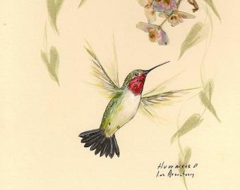 Hummingbird print 5 x 7 inches