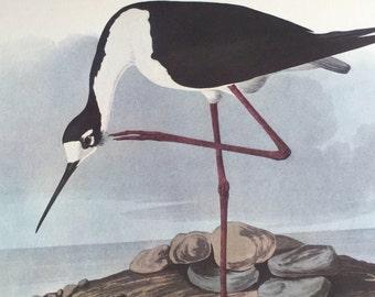 Vintage Bird Prints - Audubon Print - Vintage Bird Picture - Antique Bird Prints - Ducks