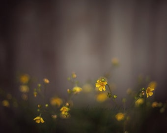 wildflower photographyyellow, gray, grey, dark, moody, nature photography, mustard, botanical photography / a light in the fog