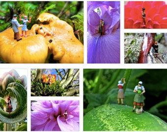 Photograph Prints & Cards