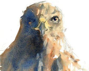 Hawk Print   Hawk   Hawk Painting   Bird of Prey   Bird Print   Bird Art   Sizes A4 & A3   Widlife Art