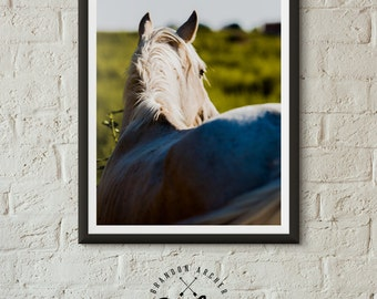 Morning Light Horse Print Color Photography Horse Photo