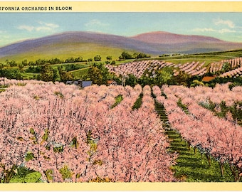 California Orchards in Bloom Vintage Postcard (unused)