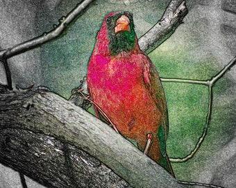 Cardinal Sentinel