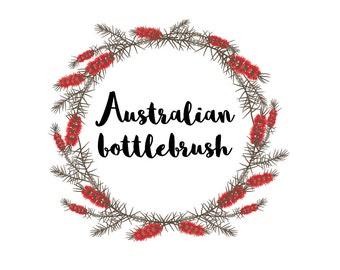 Clip Art Australian flora callistemon elements, bottlebrush, australian flower art, downloadable flower graphics vector flower
