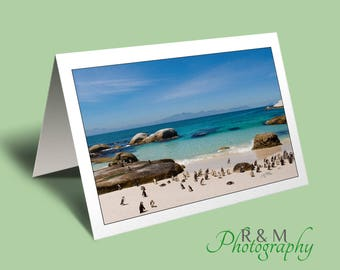 Boulders Beach greeting card - greetings card - penguins - blank card - seascape card - nature card - south africa - any occasion card