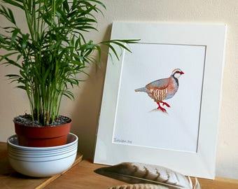 Partridge Giclée Print
