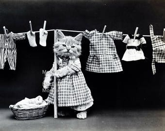 Black and white cat photo, Cat doing laundry,