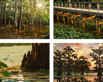 "Bayou Print Set | ""Cypress Forest Photo Set""  | Texas Landscape Wall Art - Louisiana Swamp Photo - Bayou Photo Set - Louisiana Photo Set"
