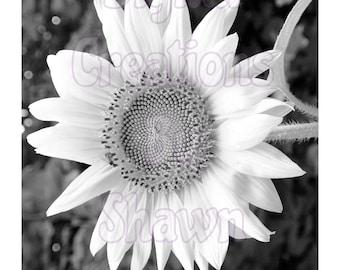 Heather's Sunflower