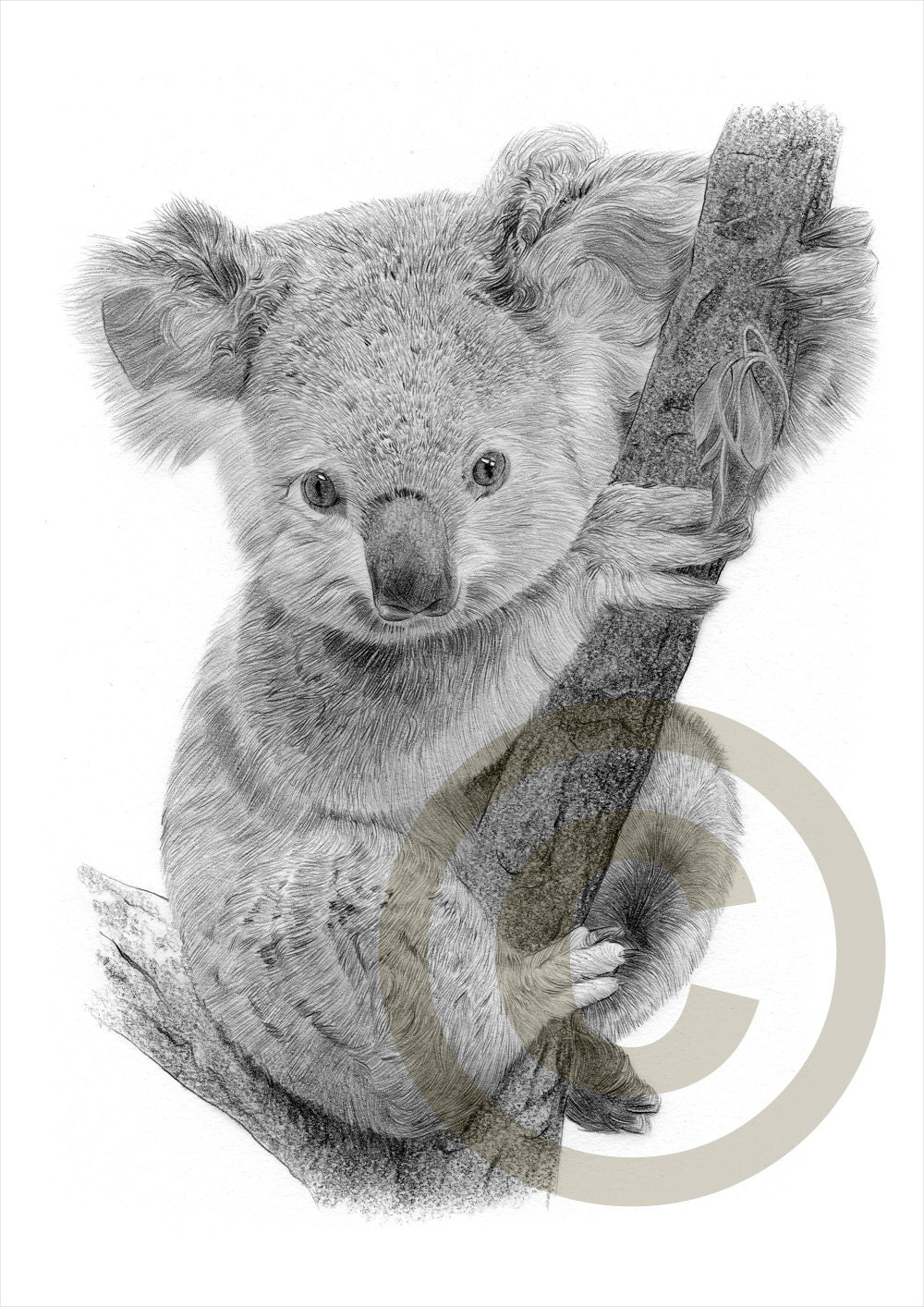 Baby Koala pencil drawing print A4 size artwork signed by