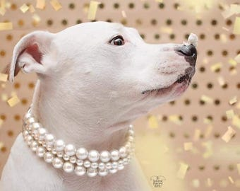 The Beebs in Ivory~ Pearl Dog Collar,Cat collar, Buckle Collars, Martingale Collars, Dog Pearls UNBREAKABLE GUARANTEE!