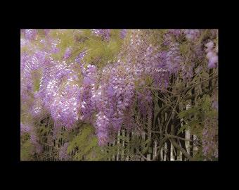 Floral Wall Art-24x36 Print-Purple Wall Decor-Wisteria Photograph-Romantic Wall Art-Lavender-Purple-Green-Guest Room/Nursery/Bathroom Decor