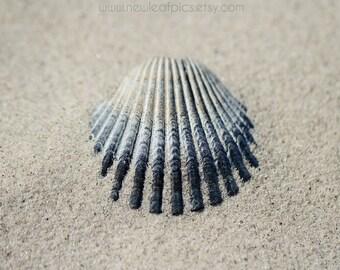 Seashell Photograph Beach Art, Coastal Wall Print, Beach Photography, Black and Gray Seashell Print, Cottage Coastal Decor, Shell Wall Photo