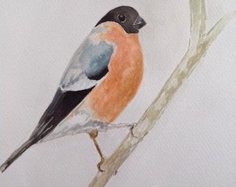Original Bullfinch Watercolour Painting (bird, birds, art, unique, Christmas present, unframed)