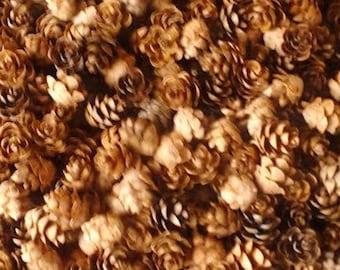 300+ New Hemlock Variety Mini Pine Cones