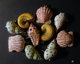 Shell charms in resin, set of 10 pieces