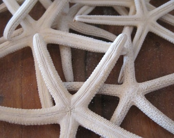 "Mini White Starfish (12) - 2 1/2"" to 4"" Starfish - Seashells - Seashell Supply - Starfish - Coastal Home Decor"