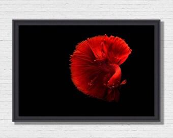 Ballet - Photo of Art framing floater fish