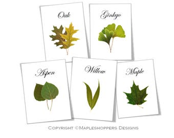 Botanical Wedding Table Cards, Woodland Table Cards-Flat Cards 5x7 inches-PDF Format-Wedding Tree Cards, Leaf Name Cards INSTANT DOWNLOAD