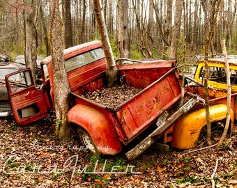 1965 Ford Truck with a Tree growing out of truck bed Photograph